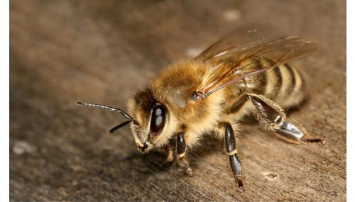 """""""Casele de albine"""" fabricate aditivat pentru a stimula interesul public pentru prezervarea albinelor"""